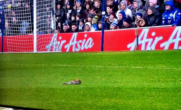squirrel 600x365 Squirrel Delays QPR vs Leicester City Match For 2 Minutes As Goalkeeper Chases Animal Around Pitch